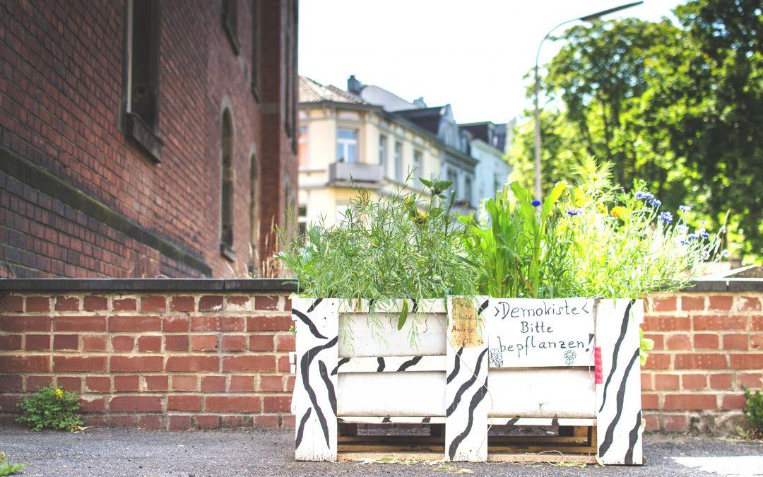 """6. Oktober '18 – Aktionstag """"Bonn wird Klima-Garten"""" – Workshops: Urban Gardening, Pilzzucht, Dachgärten"""