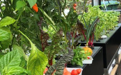 """SAIN auf der Tagung der BLE """"Altes Gemüse für neues Gärtnern"""" in Bonn"""