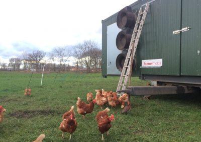 Mobiler Hühnerstall auf dem Köstershof
