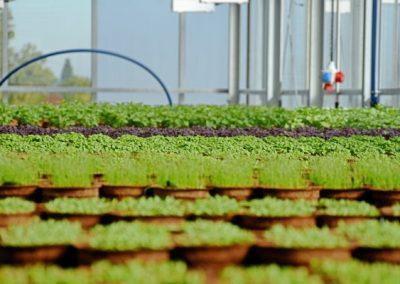 Dachgewaechshaus mit Pflanzen
